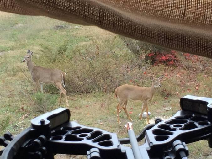 2012 George Blind & 2 deer